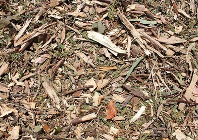 Leaf Bush Mulch
