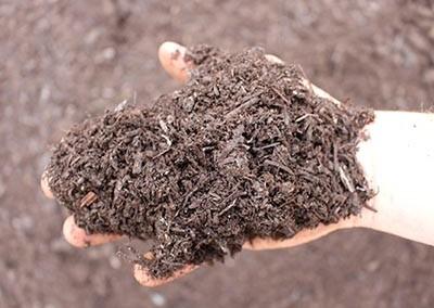 Compost - Mushroom